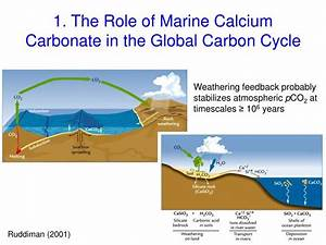 Ppt - Ocean Carbonates  Global Budgets And Models Powerpoint Presentation