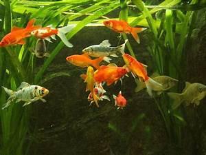 Goldfisch Haltung Im Teich : teichgr en f r fische fischteiche ~ A.2002-acura-tl-radio.info Haus und Dekorationen