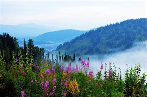 foto sibirien russland alatau nebel natur huegel strauch