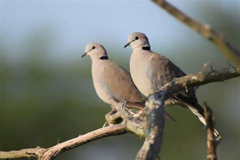 days  blogmas  turtle doves  uk blog