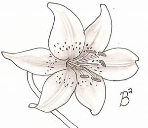 Tiger Lily Drawing at GetDrawings.com | Free for personal ...