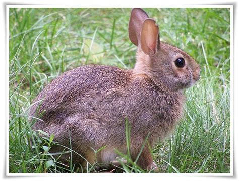 name an animal that starts with the letter n animals names that start with r animals name a to z 49694