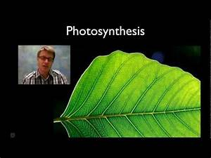 Photosynthesis In Detail