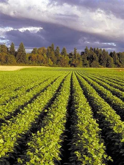 Deferral Programs For Agricultural Land And Natural Spaces