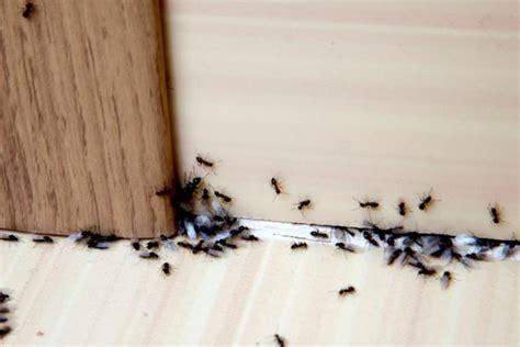 Come Eliminare Le Formiche Dall Orto Come Eliminare Le Formiche Dalla Casa Un Aiuto Dalla
