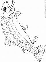 Trout Coloring Pages sketch template