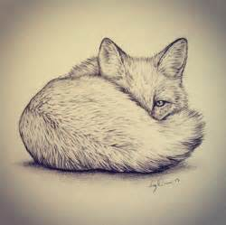 Foxes Drawings
