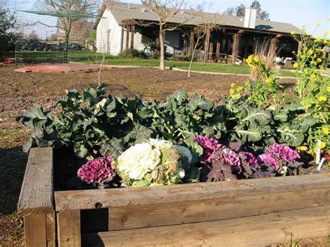 Starting A Vegetable Garden For The