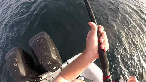 grouper gulf mexico catch