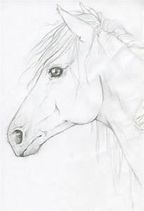 Horse Head by silken.deviantart.com on @deviantART | My ...