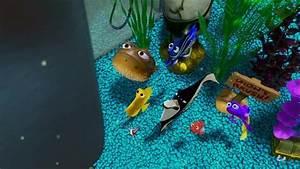 Finding Nemo - Finding Nemo Image (3568636) - Fanpop