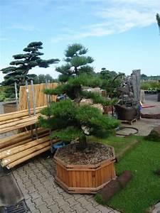 fruhjahrsputz im heimischen garten mit dem richtigen With garten planen mit bonsai shop de