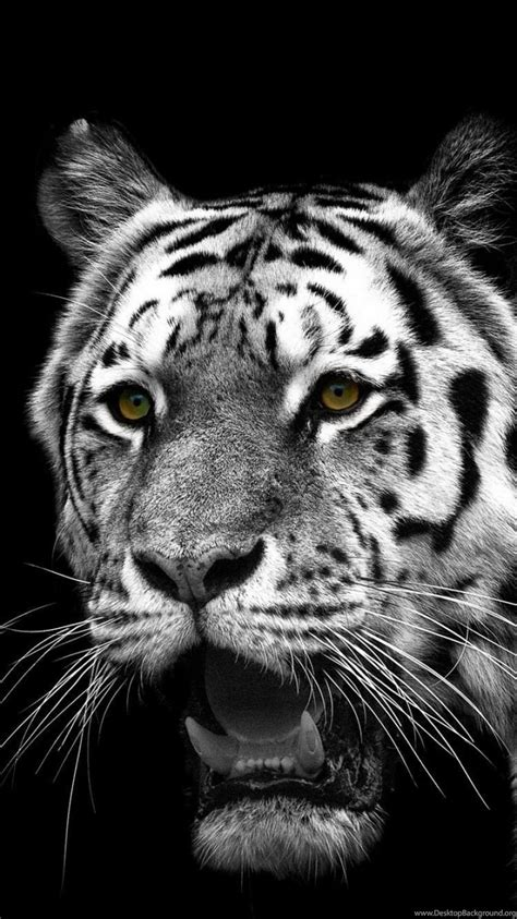 Iphone 6 Animal Wallpaper - iphone 6s animal white tiger wallpapers id 301455 desktop