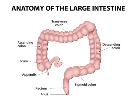 Colorectal Cancer Causes, Symptoms And Treatments. Pediatrician Job Responsibilities. Burbank Spa And Garden Home Improvements Loan. Fashion School Ranking Amazon Com Web Hosting. Education Investment Account E D M Express. Cardinal Carter Academy For The Arts. San Diego Spine Center St Louis Pest Control. Net Performance Profiler Does Arthritis Hurt. Private Schools Walnut Creek Ca