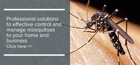 how to keep away mosquitoes from home prevent mosquitoes at home debugged