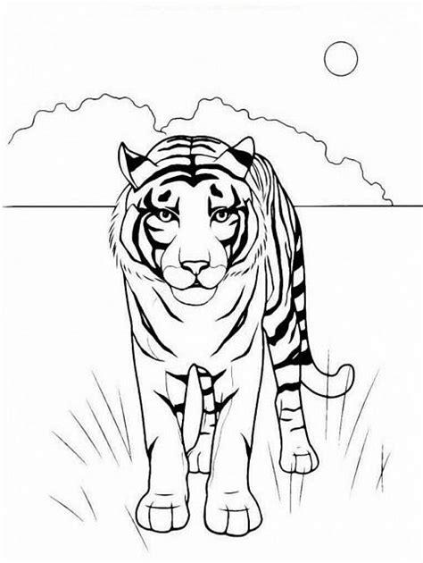 disegni da colorare animali della savana tigre della savana da stare e da colorare gratis
