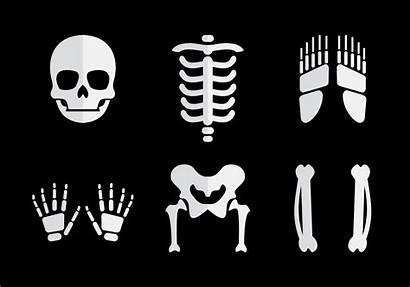 Bones Vector Human Vectors Joints Skeleton Clipart