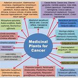 Chemotherapy | 499 x 480 jpeg 64kB