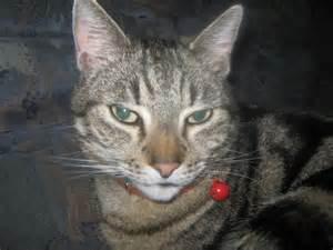 Laver Un Chaton : baigner son chaton forum sur les chats ~ Nature-et-papiers.com Idées de Décoration