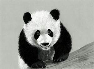 Panda colored pencil drawing by JasminaSusak on DeviantArt
