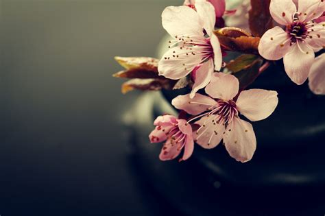 spa flowers background stones water pink dark side wet zen copy composition concept space freepik backgr massage japanese vectors anemone