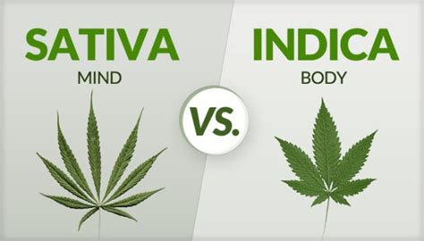 Sativa Vs Indica; Know The Major Differences [guide]
