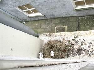 Faire Fuir Les Pigeons : comment faire fuir les pigeons de mon jardin design de ~ Melissatoandfro.com Idées de Décoration