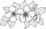 Coloring Visit Flower February sketch template