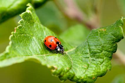 Natürliche Schädlingsbekämpfung Tipps Gartenbau