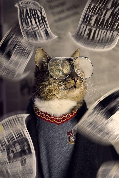 cat diagnosed  feline leukaemia turned   fashion