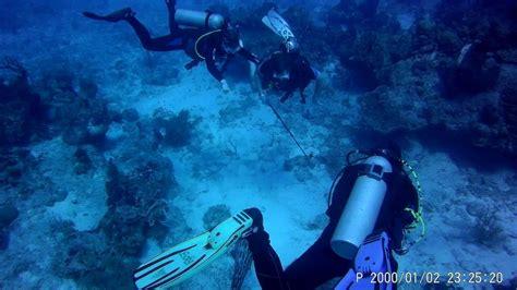 grouper eel moray