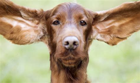 Funny Pics of Ears