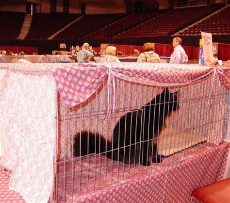 cat show drapes cat show cage curtains showcatsonline the