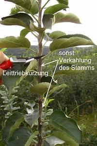 Kirschbaum Richtig Schneiden : schneiden von s ulenobst tipps vom profi ~ Frokenaadalensverden.com Haus und Dekorationen