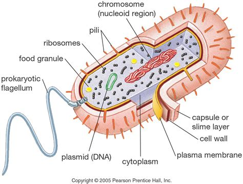 Mike Online Biology Mob University Bio Cell