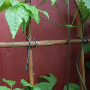Rankhilfe Clematis Selber Bauen : bambusklammern tonkinklammern rankgitter selber bauen ~ Lizthompson.info Haus und Dekorationen