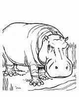 Hippo Coloringme sketch template