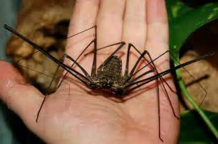 What's the Biggest Spider in the World