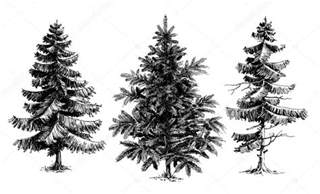Types Of Christmas Trees by Pine Trees Christmas Trees Realistic Hand Drawn Vector Set