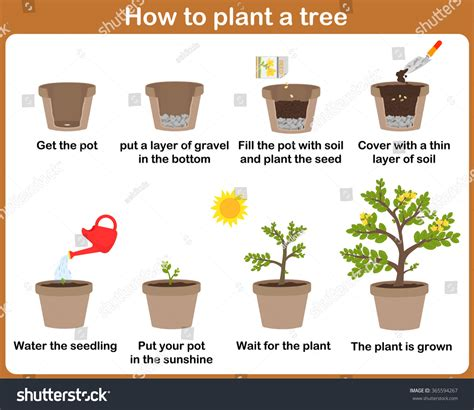 how to plant a tree how plant tree easy step by stock vector 365594267 shutterstock