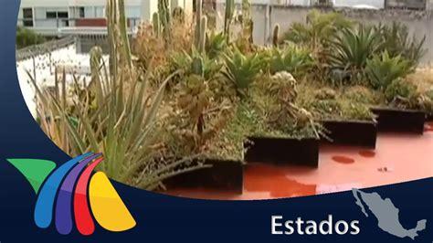 Techos Verdes Con Jardines En Macetas  Noticias De
