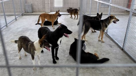 animal shelters in la riverside offer free adoptions