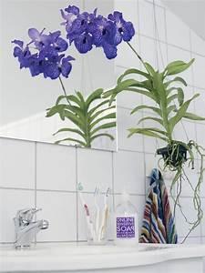 Orchidee Vanda Pflege : die richtige zimmerpflanze f r das bad pflanzenfreude ~ Lizthompson.info Haus und Dekorationen