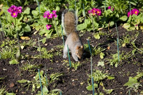 protect plants from squirrels how to keep animals out of your garden petal talk