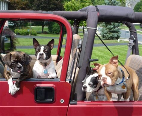 images  pet car rides  pinterest cars