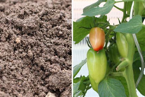 erde für tomaten tomaten pflanzen wann ist die beste pflanzzeit tomaten de