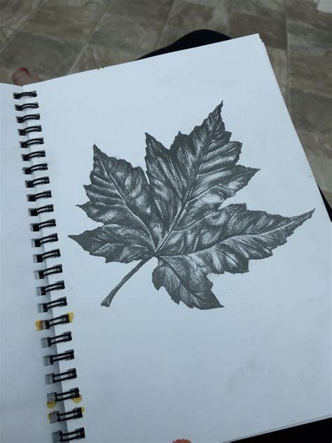 tonal drawing   leaf watercolor   gcse art