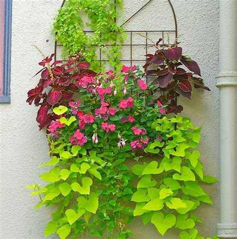climbing plants for shade in pots container gardens made for the shade garden design