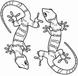 Gecko Lizard Coloring Pages Printable Geckos Realistic Frilled Sheets Drawing Cool2bkids Bestcoloringpagesforkids Desert Python Ball Getcolorings Animal Preschool Colors Animals sketch template