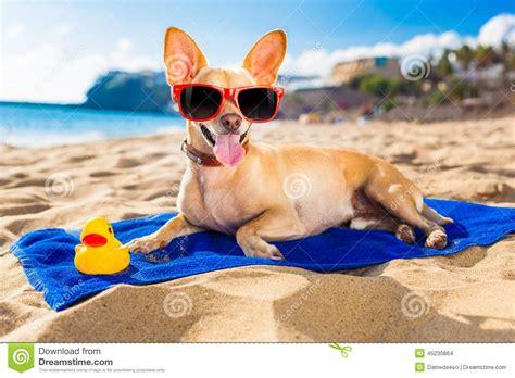Summer Animal Wallpaper - adorable summer animals hd wallpapers hd wallpaper